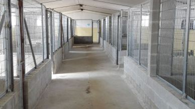 kennel after