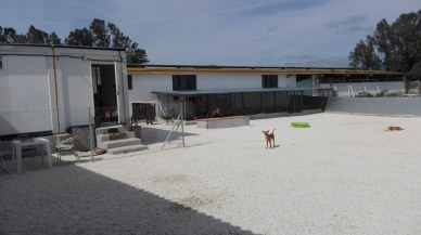 kennel yard after